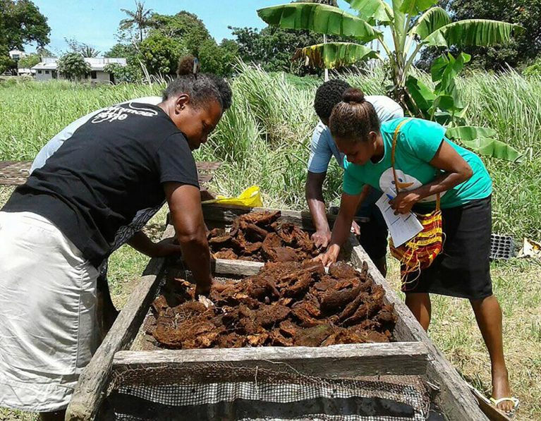 Food and resilience during COVID in the Solomon Islands